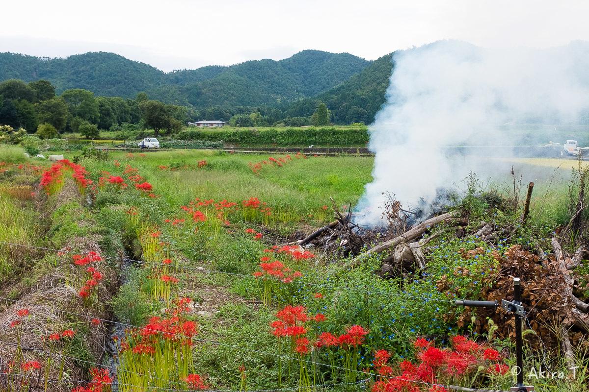 京都 嵯峨野の彼岸花 with YAMAHA SR400_f0152550_18210231.jpg