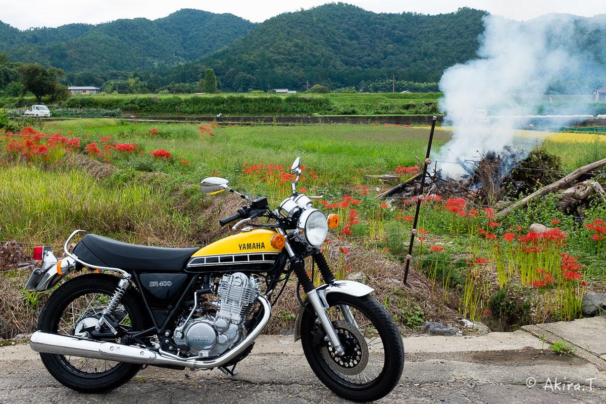 京都 嵯峨野の彼岸花 with YAMAHA SR400_f0152550_18211711.jpg