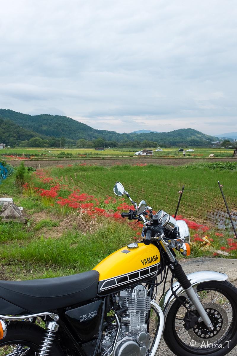 京都 嵯峨野の彼岸花 with YAMAHA SR400_f0152550_18213002.jpg