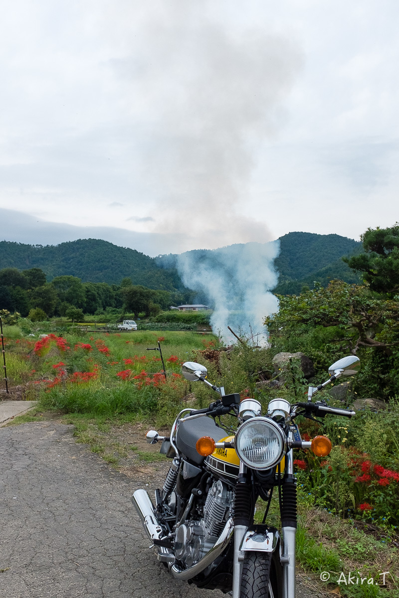 京都 嵯峨野の彼岸花 with YAMAHA SR400_f0152550_18214548.jpg