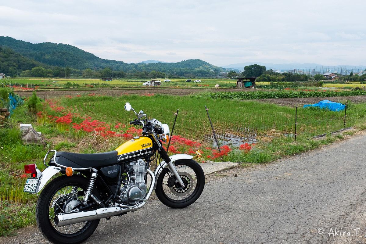 京都 嵯峨野の彼岸花 with YAMAHA SR400_f0152550_18220231.jpg