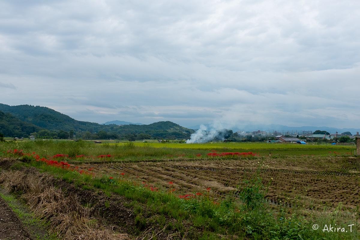 京都 嵯峨野の彼岸花 with YAMAHA SR400_f0152550_18233020.jpg