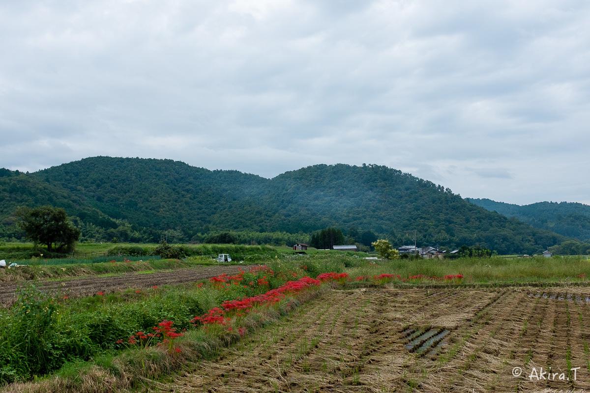 京都 嵯峨野の彼岸花 with YAMAHA SR400_f0152550_18234699.jpg