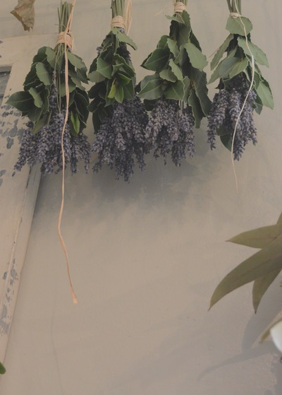 dried flower。。。_a0229658_1641576.jpg
