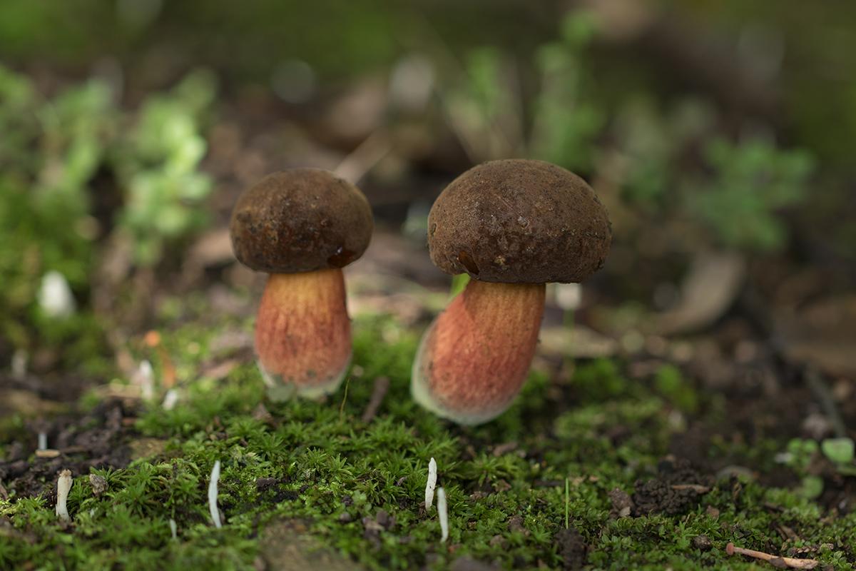 キノコの森はメルヘンの世界 2_a0261169_174943.jpg
