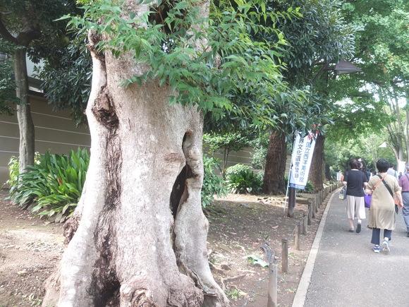 上野の森_d0193569_15323834.jpg