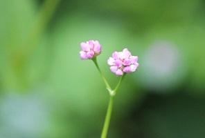花の写真 「可愛い草花」 滝野すずらん丘陵公園 続続編 行ってきました。_f0362073_06393166.jpg