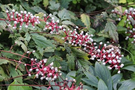 花の写真 「可愛い草花」 滝野すずらん丘陵公園 続続編 行ってきました。_f0362073_06425816.jpg