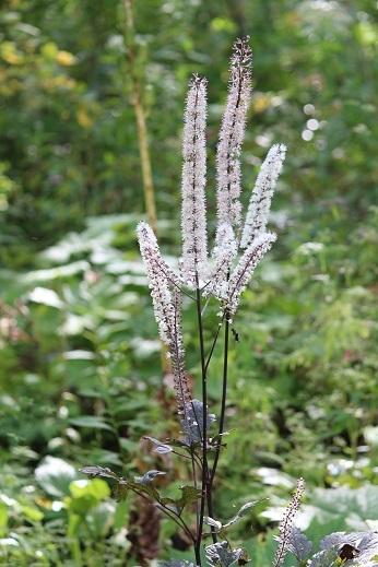 花の写真 「可愛い草花」 滝野すずらん丘陵公園 続続編 行ってきました。_f0362073_06440887.jpg