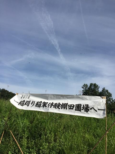 稲刈り、はさかけ体験_d0182179_1905344.jpg
