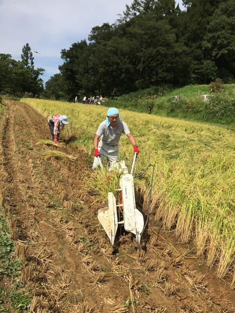 稲刈り、はさかけ体験_d0182179_1932454.jpg