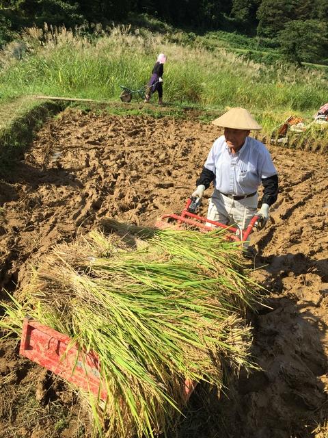 稲刈り、はさかけ体験_d0182179_1940381.jpg