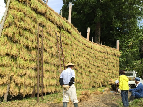 稲刈り、はさかけ体験_d0182179_1953350.jpg
