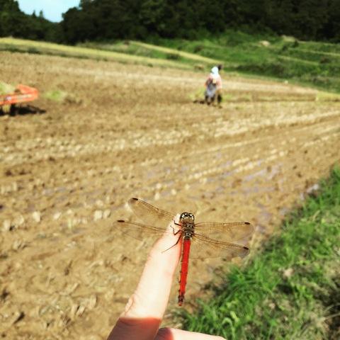 稲刈り、はさかけ体験_d0182179_2001739.jpg