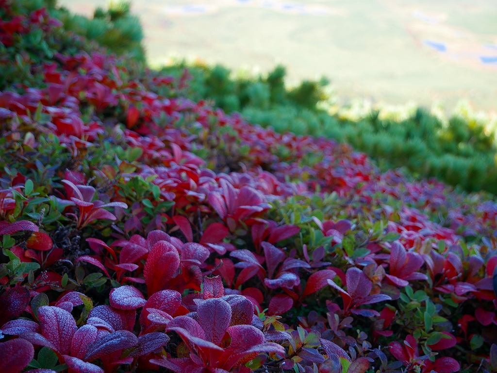 愛別岳の紅葉、9月22日-愛山渓温泉から愛別岳編-_f0138096_1135014.jpg