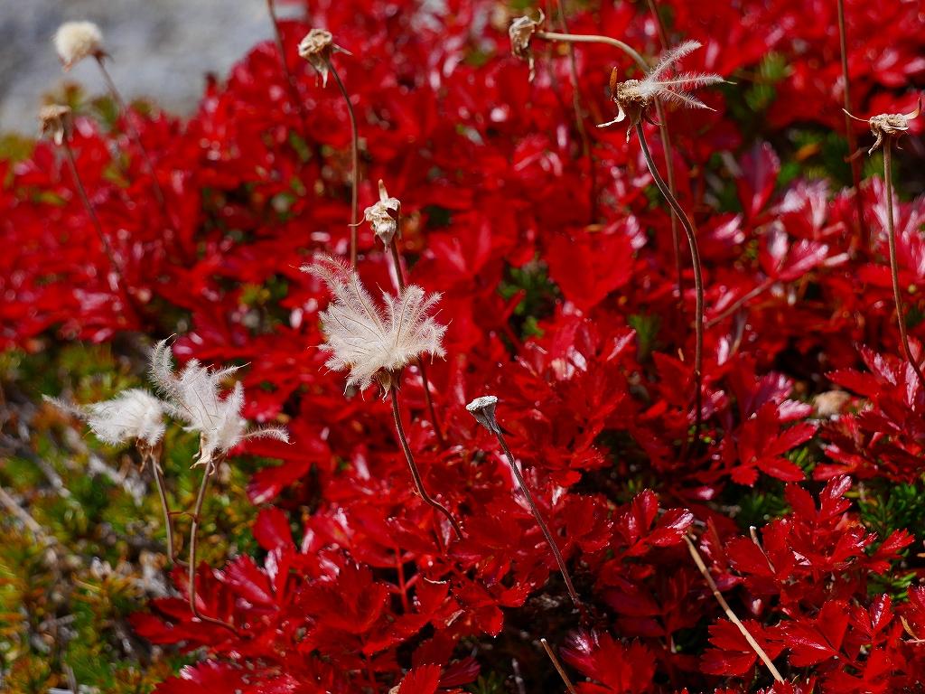 愛別岳の紅葉、9月22日-愛山渓温泉から愛別岳編-_f0138096_1154392.jpg