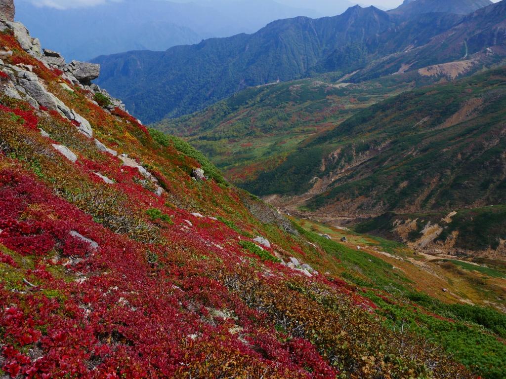 愛別岳の紅葉、9月22日-愛山渓温泉から愛別岳編-_f0138096_1155025.jpg