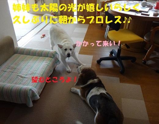 f0121712_14325359.jpg