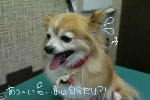 b0130018_00145382.jpg