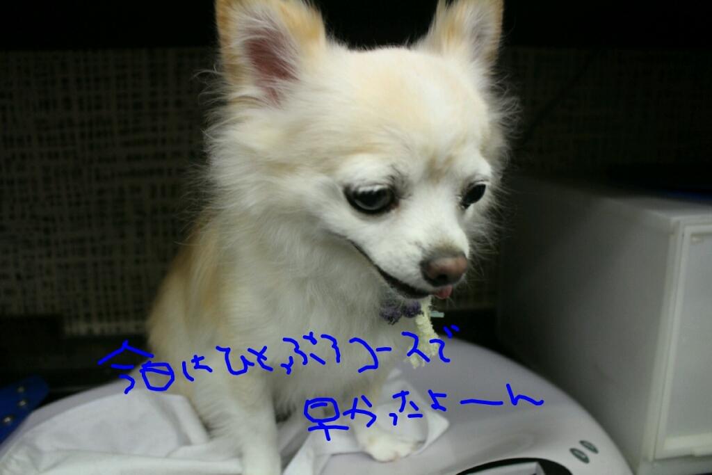 b0130018_20045275.jpg