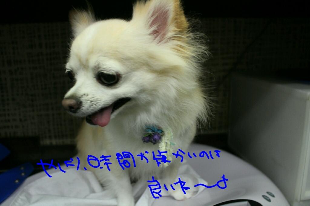すっかり~_b0130018_20050166.jpg