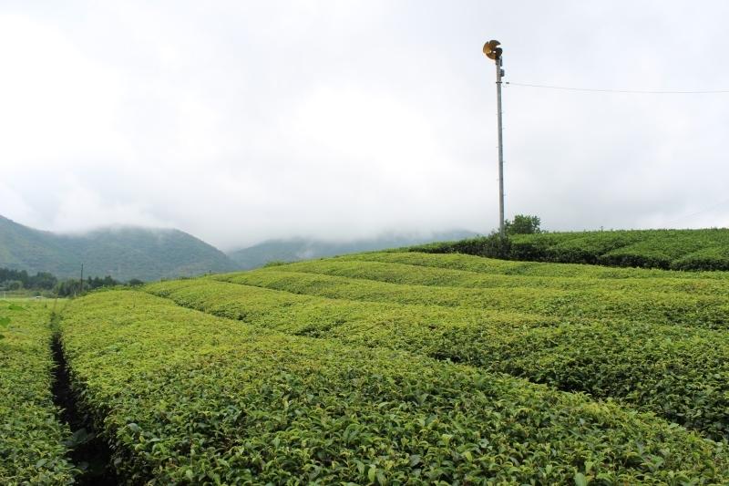 紅茶を追っかけて、富岡_b0220318_23503337.jpg
