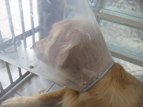 ゴーちゃん退院しました。_e0350927_09565061.jpg