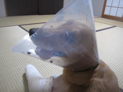 ゴーちゃん退院しました。_e0350927_09584904.jpg