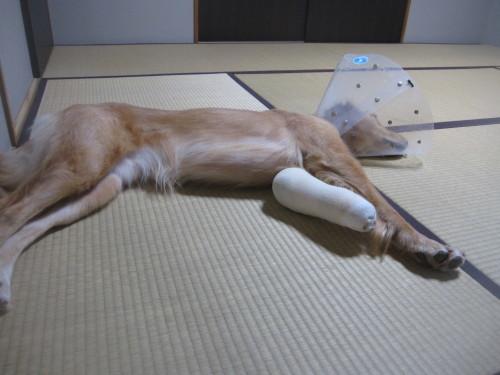 ゴーちゃん退院しました。_e0350927_09590001.jpg