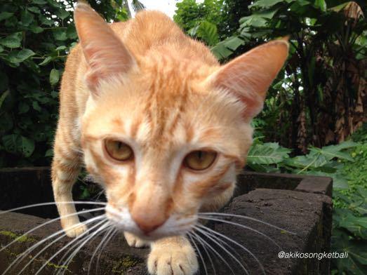 息子の猫さん_a0120328_18573976.jpg