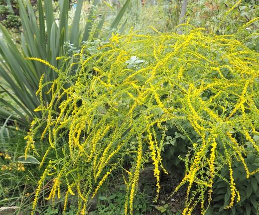 秋を告げる植物_f0139333_21383924.jpg