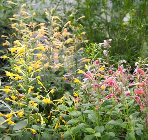 秋を告げる植物_f0139333_21583780.jpg