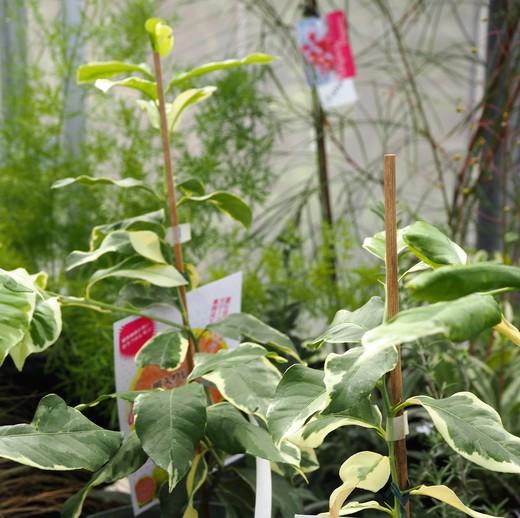 秋を告げる植物_f0139333_2202169.jpg