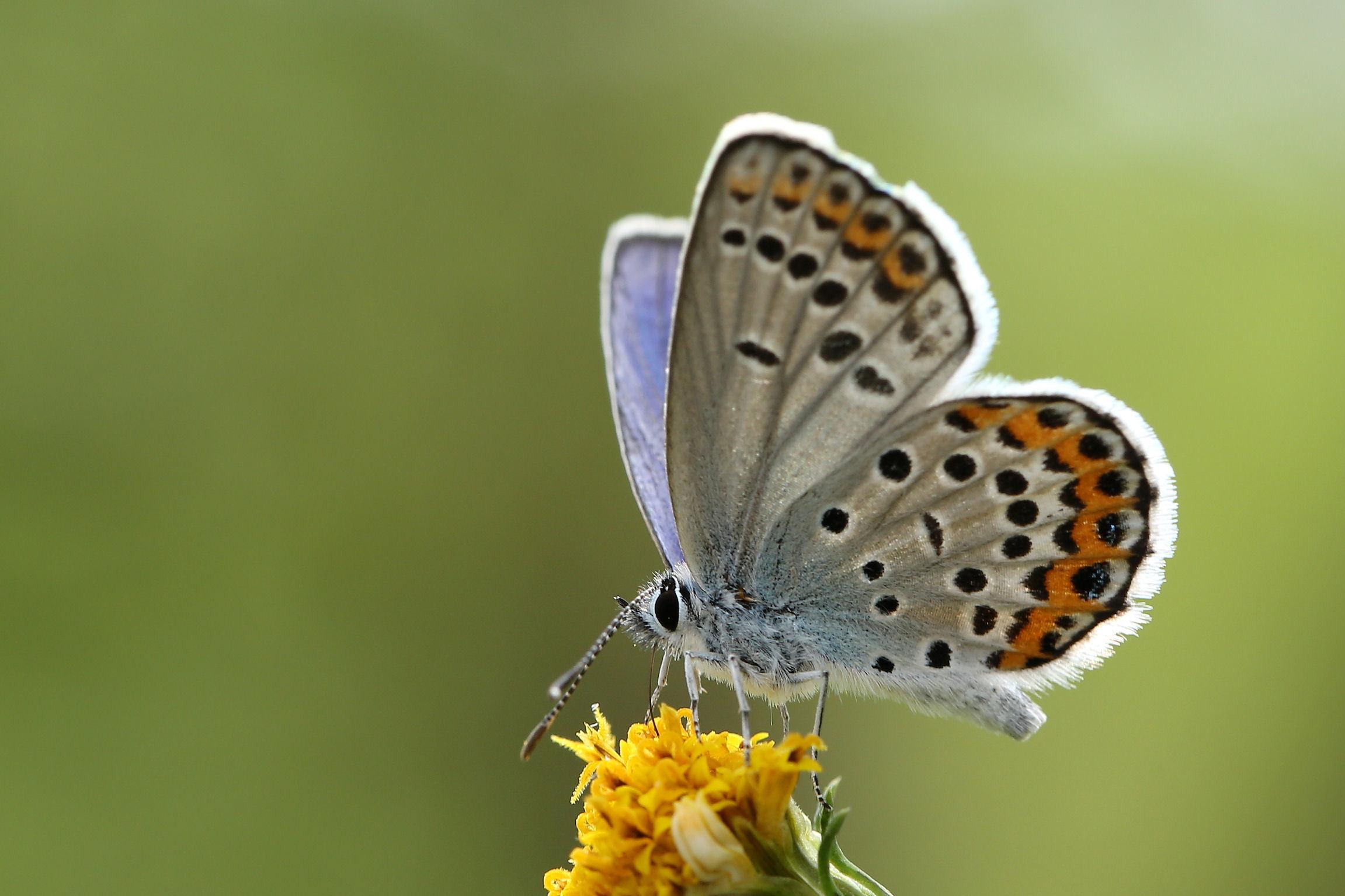 初見の蝶 2016_f0345350_21441066.jpg