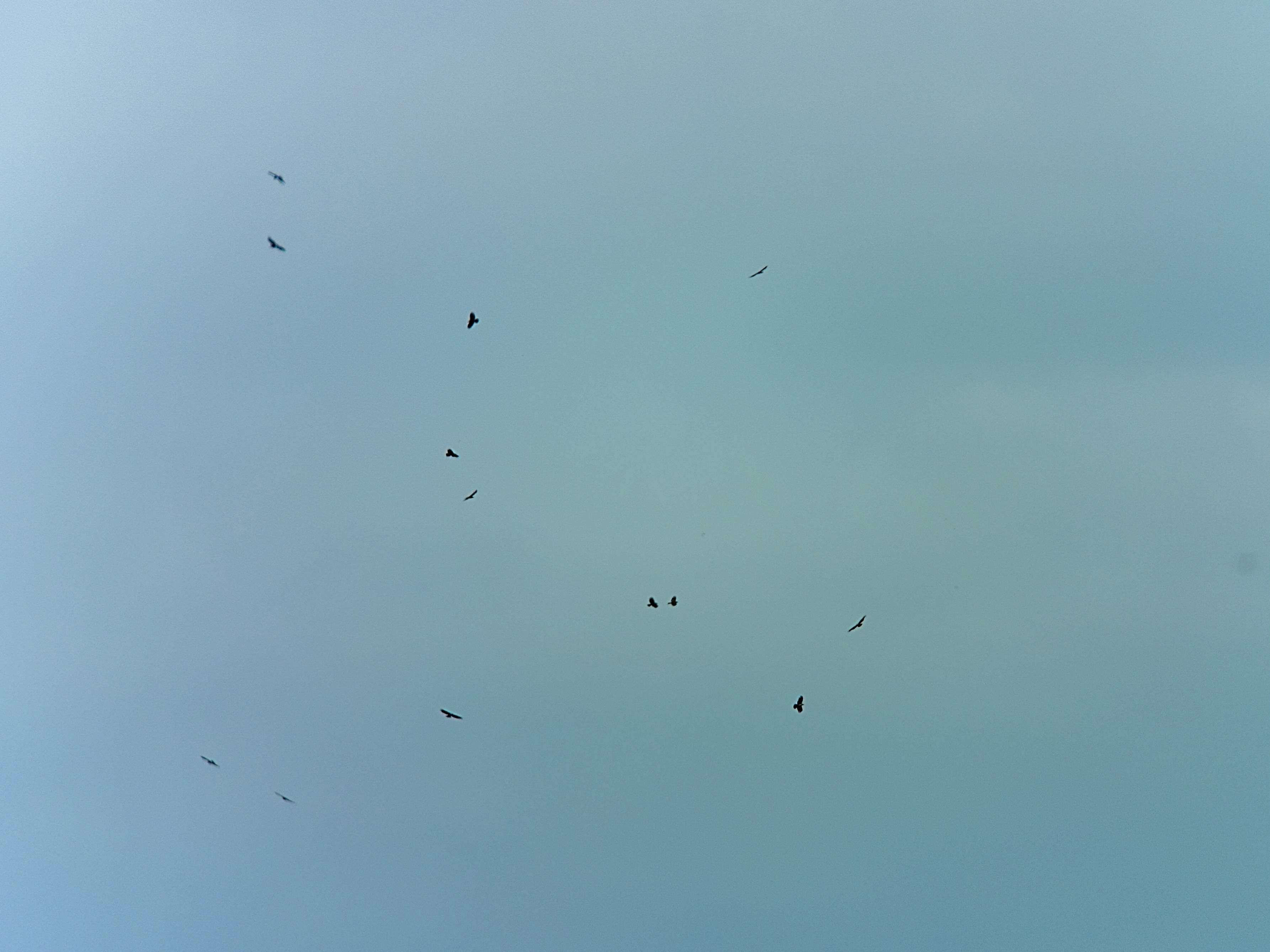 鷹の渡りデビュー!_a0143780_20421818.jpg