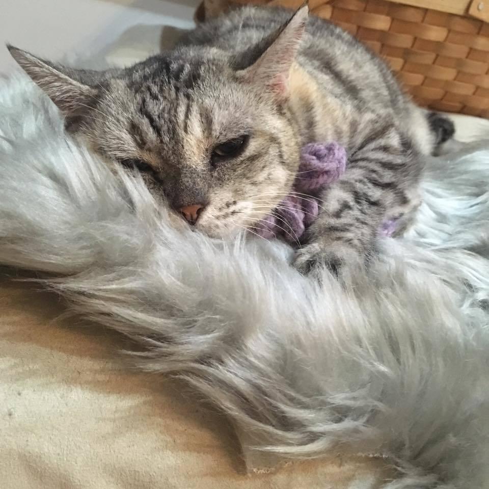 Real fur ♡ fake fur_b0195783_09201510.jpg