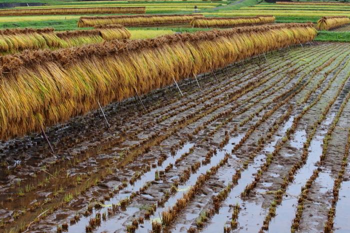 秋の収穫_f0361287_19271083.jpg