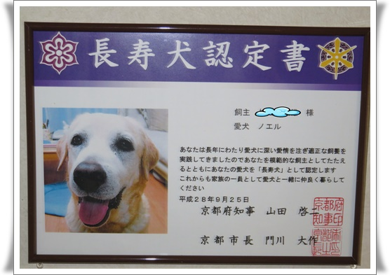 長寿犬ノエル_a0197911_23241348.jpg