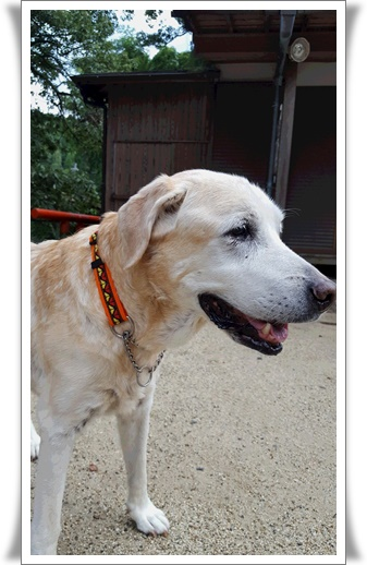 長寿犬ノエル_a0197911_2382965.jpg