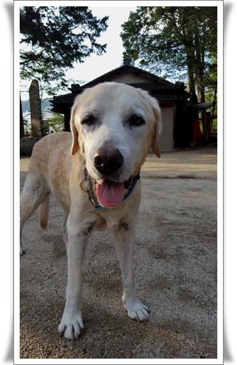 長寿犬ノエル_a0197911_238781.jpg