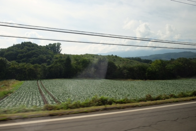 嬬恋村にサツマイモを_d0130714_19163960.jpg