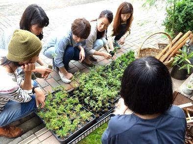 豆盆栽ワークショップ開催風景_d0263815_15441186.jpg