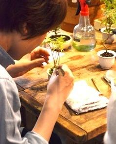 豆盆栽ワークショップ開催風景_d0263815_17212835.jpg