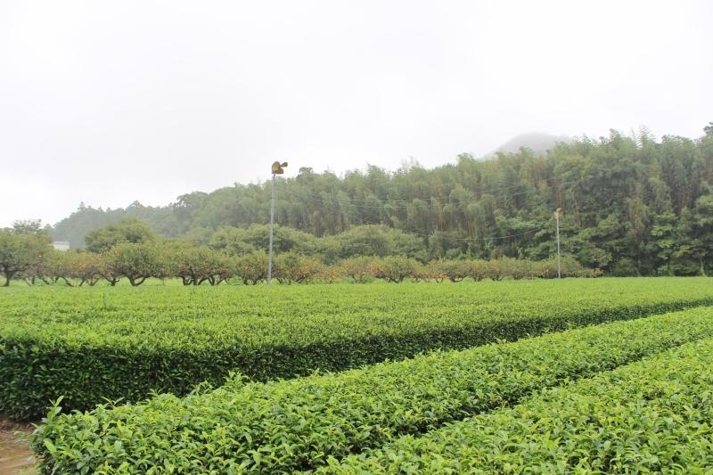 紅茶を追っかけて、富岡_b0220318_08194282.jpg