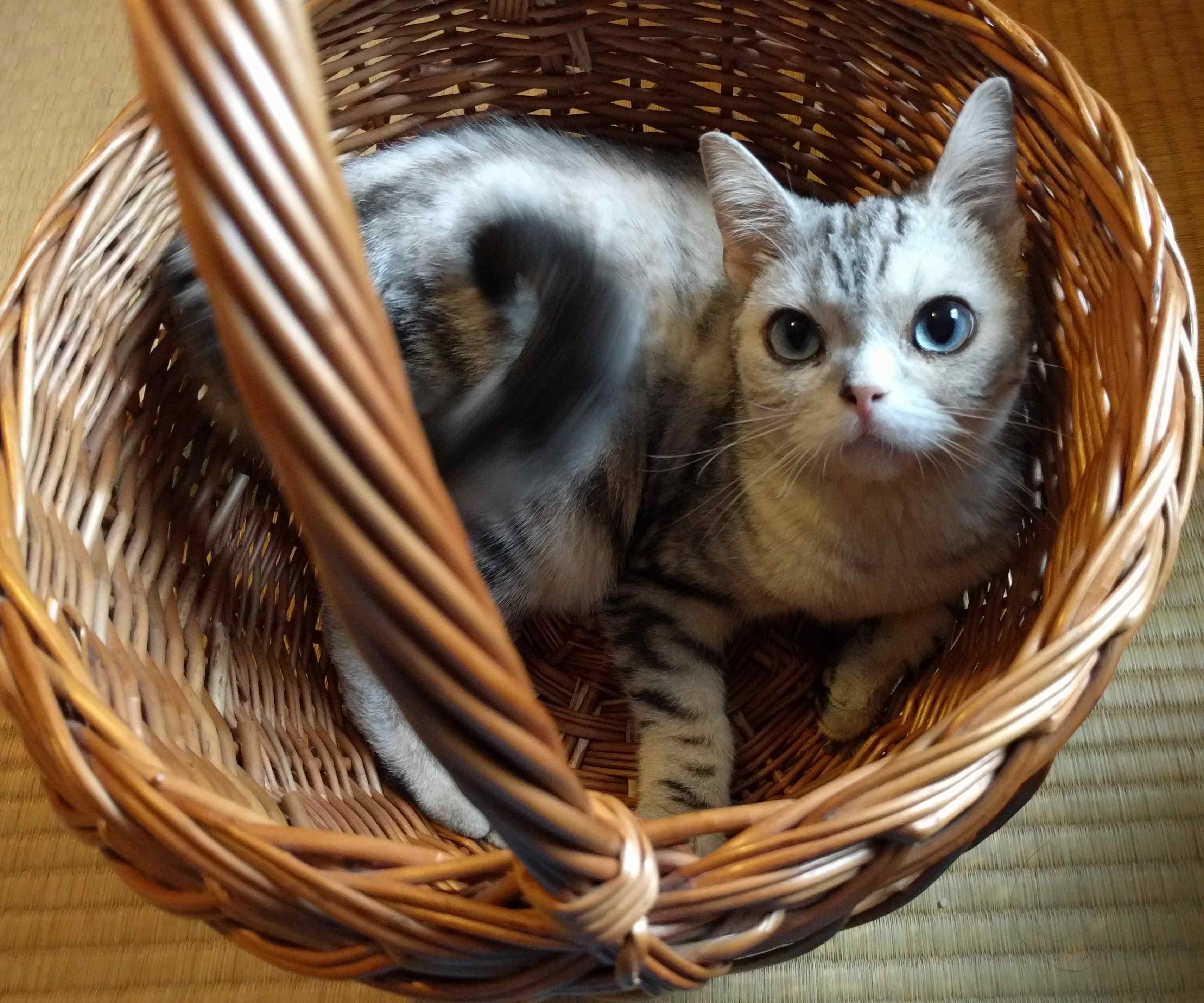 迷い猫ゆきちゃんの話4_a0265743_138099.jpg