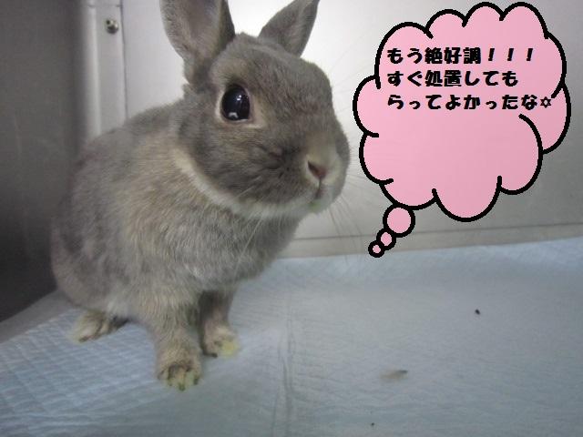 【ウサギ ホリープがでている為緊急処置】_b0059154_1813092.jpg
