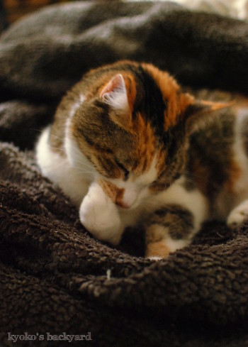 あったかい毛布の季節_b0253205_02371548.jpg