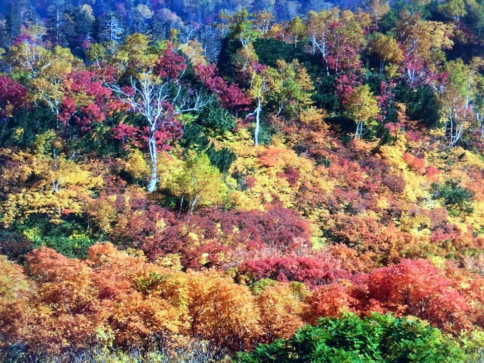 高原温泉の紅葉が見頃ですよぉ(゜o゜)_f0096216_19553779.jpg