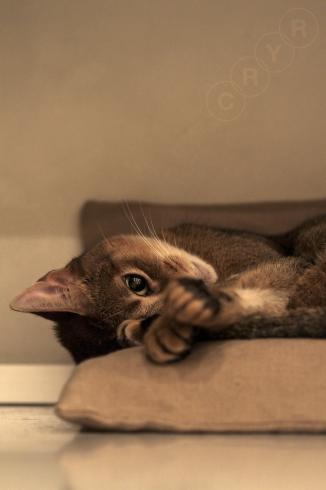 [猫的]眠たい指数_e0090124_22200376.jpg