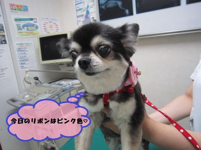 【健康診断にてみつかりました】_b0059154_12532567.jpg